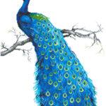 """Diamond Dotz Motiv """"Blauer Pfau"""", funkelndes Diamantbild zum Selbstgestalten ca. 60 x 84 cm groß, Malen mit Diamanten"""